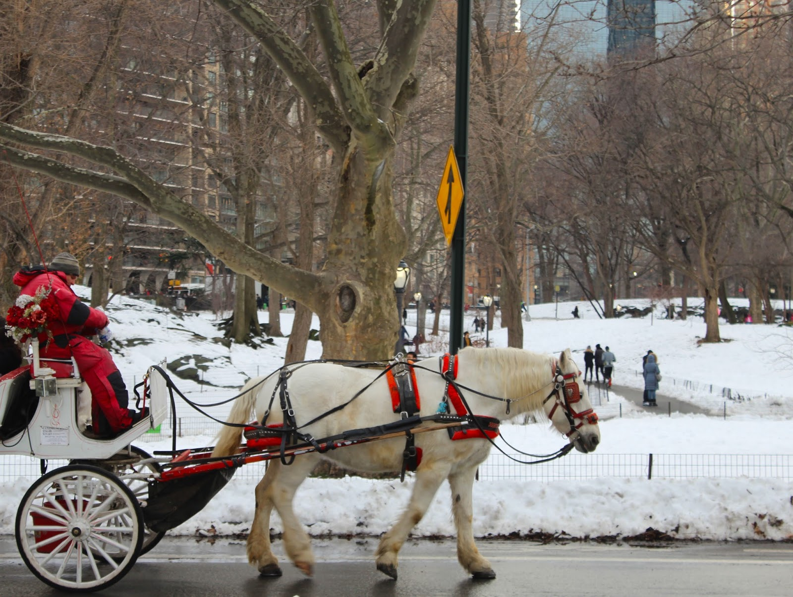 carriage ride valentine central park