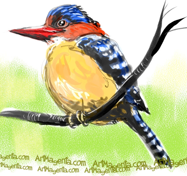 Banded Kingfisher sketch painting. Bird art drawing by illustrator Artmagenta