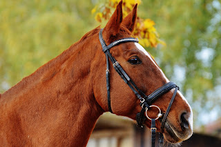 A chestnut horse's head and neck wearing a bridle looking into the distance.
