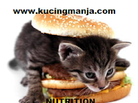 Provide Nutrition Supplements For Your Kittens Healthy to Always