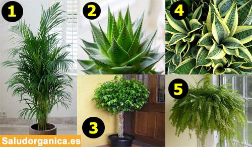 5 maravillosas plantas que limpiarán y purificarán el aire de su casa