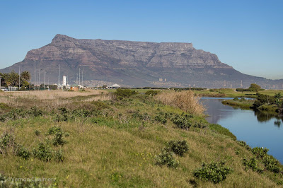 Table Bay Nature Reserve - Table Mountain View