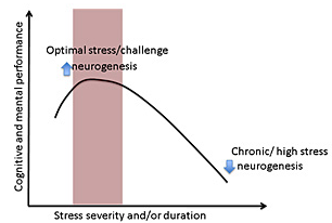 short term stress benefits