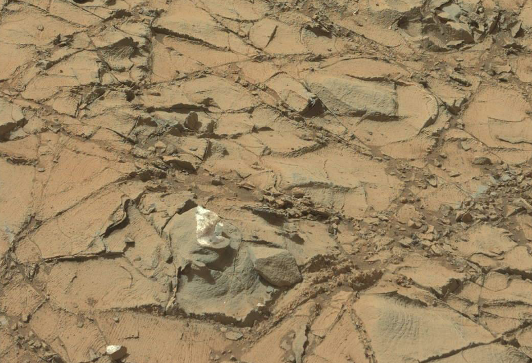 UFO SIGHTINGS DAILY: Fungus On Mars Found Close Up and In ...