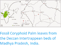http://sciencythoughts.blogspot.co.uk/2014/11/fossil-coryphoid-palm-leaves-from.html