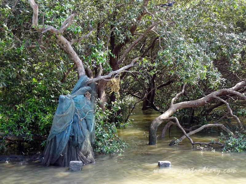 Mangroves at the Gorai Creek, Borivli