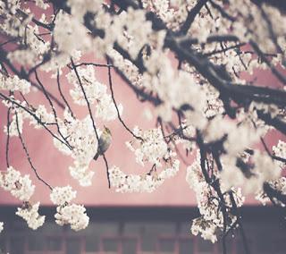 Unduh Foto Wallpaper HD Terbaik Dunia Menakjubkan Gratis - 42HDphoto.blogspot.com
