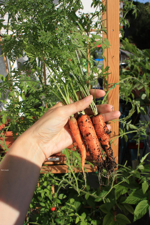 carotte du balcon