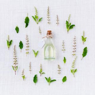 malaria herbs in nigeria