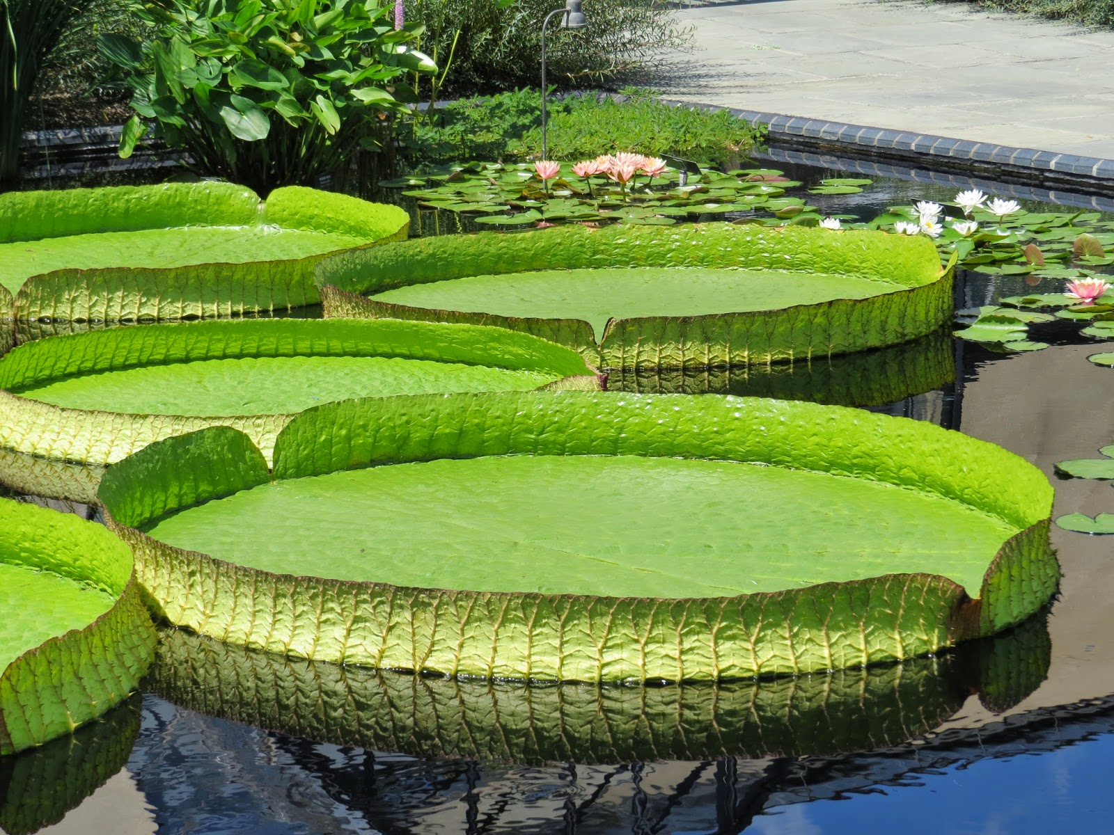 Pennsylvania gardens