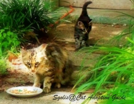 Feral cats eating cat food