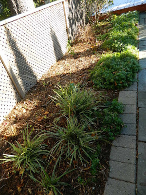 St. Clair West Village Fall Cleanup After by Paul Jung Gardening Services--a Toronto Gardening Services Company