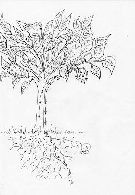 vergers arbres fruitiers biologique abricot pomme poires cerise prune pêche framboise