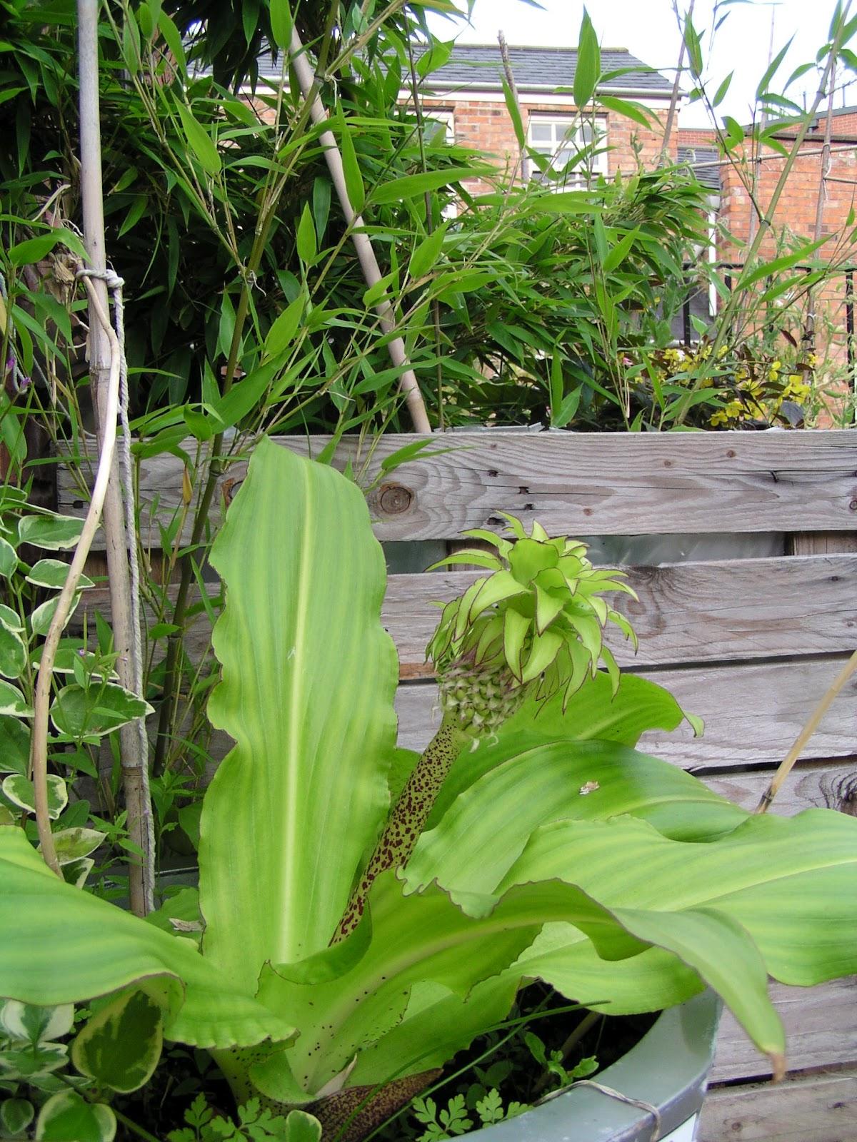 Rosie S Roof Top Garden