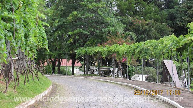 Rua Uva Itália, Otávio Rocha, Flores da Cunha, RS