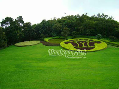 Tukang taman Surabaya Jual Rumput Swiss