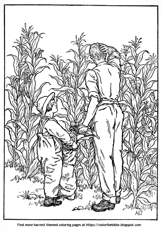 Three harvest coloring pages | Color The Bible