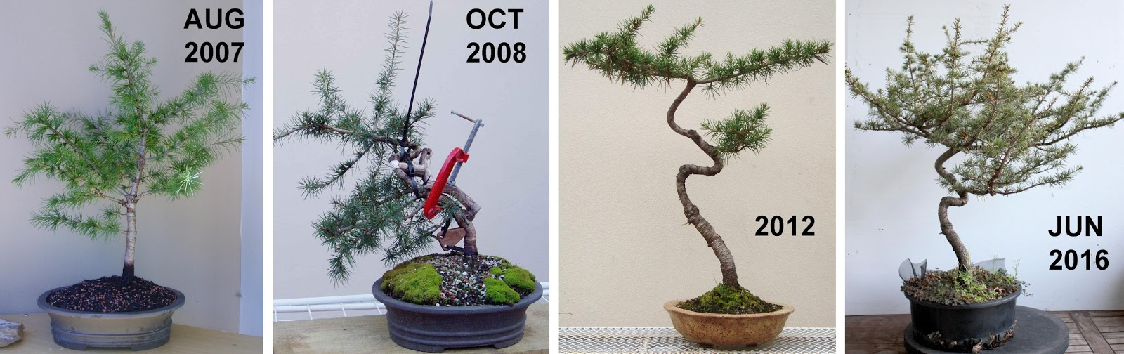 Kigawa39s Bonsai Blog