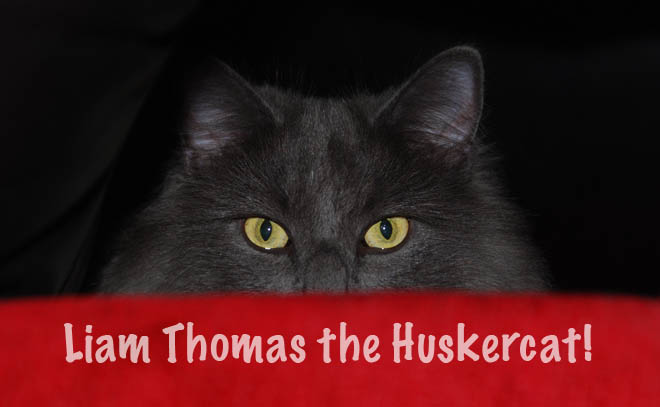 Liam Tommy the Huskercat