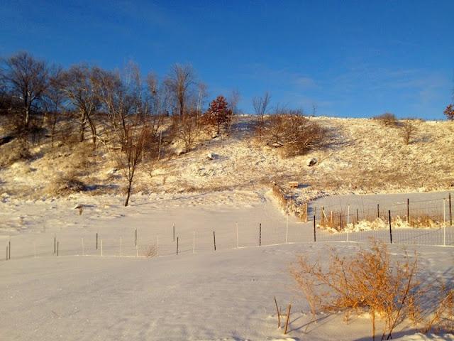 winter scene at Litengård