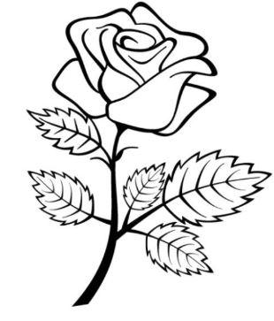 10 Gambar Bunga Cantik Dan Indah Yang Menakjubkan