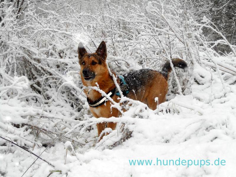 Hundepups Guten Morgen Schnee Stöckchen