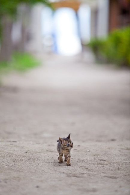 Small Cat Big World