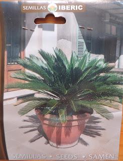 cycas semillas iberic