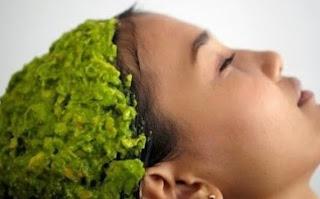 manfaat daun seledri untuk rambut