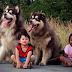 Tìm hiểu về con ve gây bệnh cho thú cưng và con người