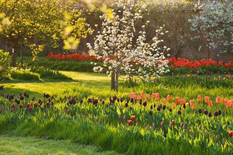 Tulipanes narcisos y jardines de primavera con clive nichols for Jardines de primavera
