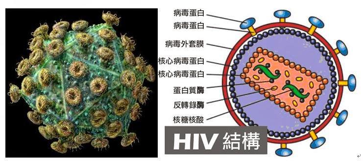 甘露春風─連老師的教室: 畢業小論文指導範例:愛滋病關懷研究