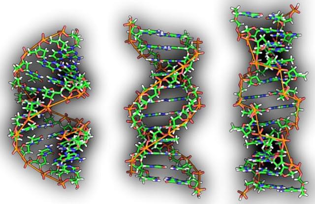 LAS CECULAS SON SERES CONSCIENTES Portada-ADN