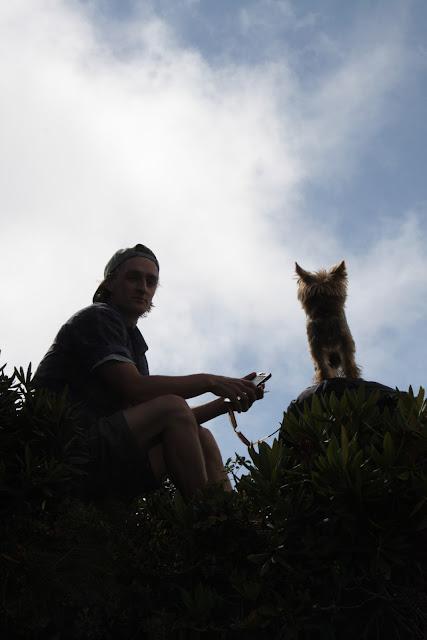 Фунтик, собака в горах, рододендрон, Сочи, Красная поляна, фото Андрей Думчев