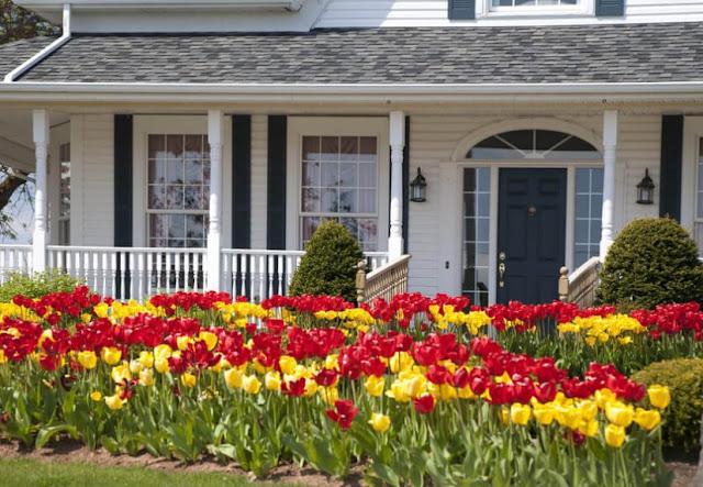 Flowers Front Yard Garden