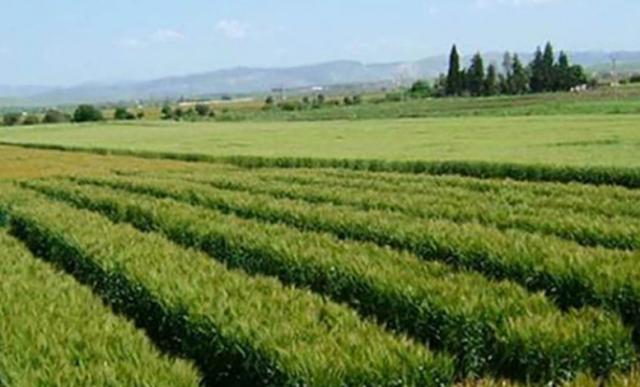 10 آلاف هكتار من الأراضي الدولية لفائدة حاملي الشهائد