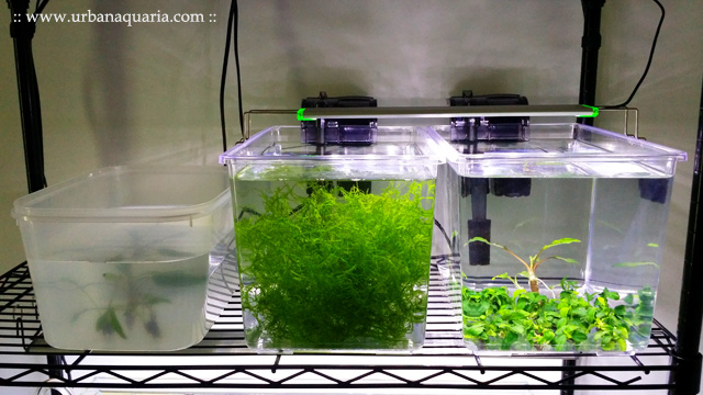 Urban aquaria aquarium plant treatment quarantine for Split fish tank