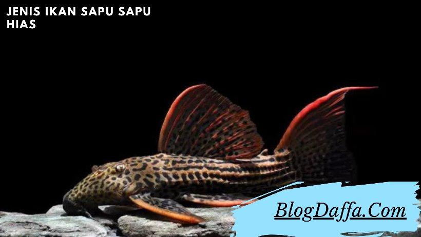 Jenis Ikan Sapu Sapu Hias