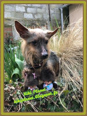 monchhichi, bebichhichi sekiguchi kiki jardin chien silky terrier yorkshire