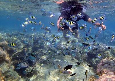 bawah laut pulau harapan, wisata pulau harapan