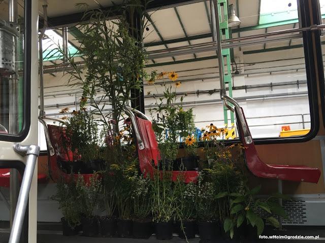 aranzacja roslinami kwiatami warszawa