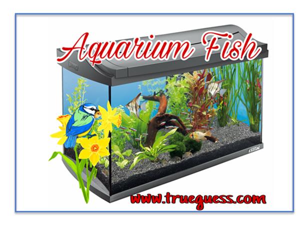aquarium-fish-romentic-story-machliyaan