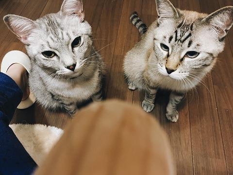2匹の猫の冷ややかな視線…
