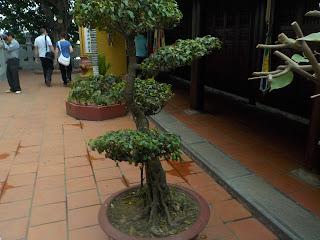 ベトナムの盆栽