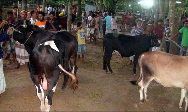 Animal hats have grown in Jamalpur