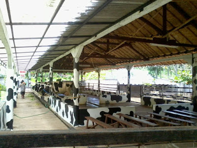 cimory on the valley bawen kabupaten semarang