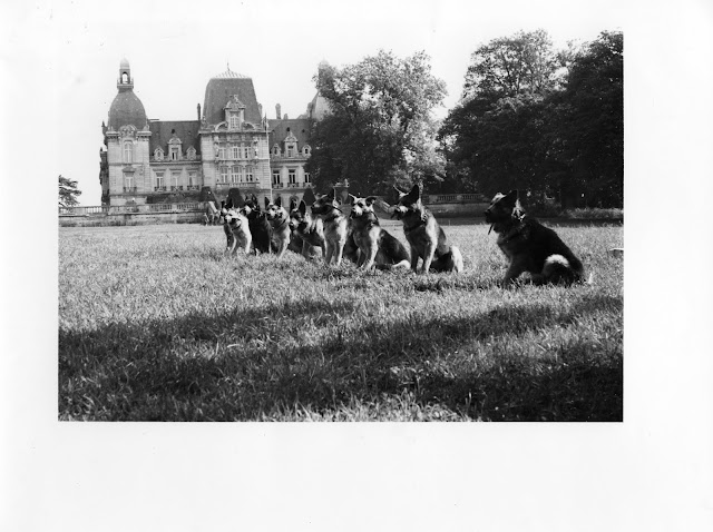 Les maîtres chien 1978
