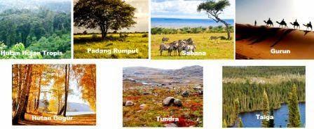 Macam-Macam Ekosistem Darat dan Ciri-Cirinya