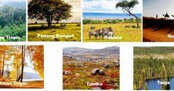 Macam Macam Ekosistem Darat Dan Ciri Cirinya Artikelsiana