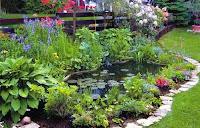 растения для пруда,растения для водоема
